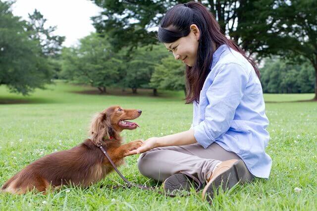 家庭犬ドッグトレーナー