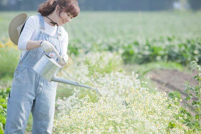 2位:園芸インストラクター