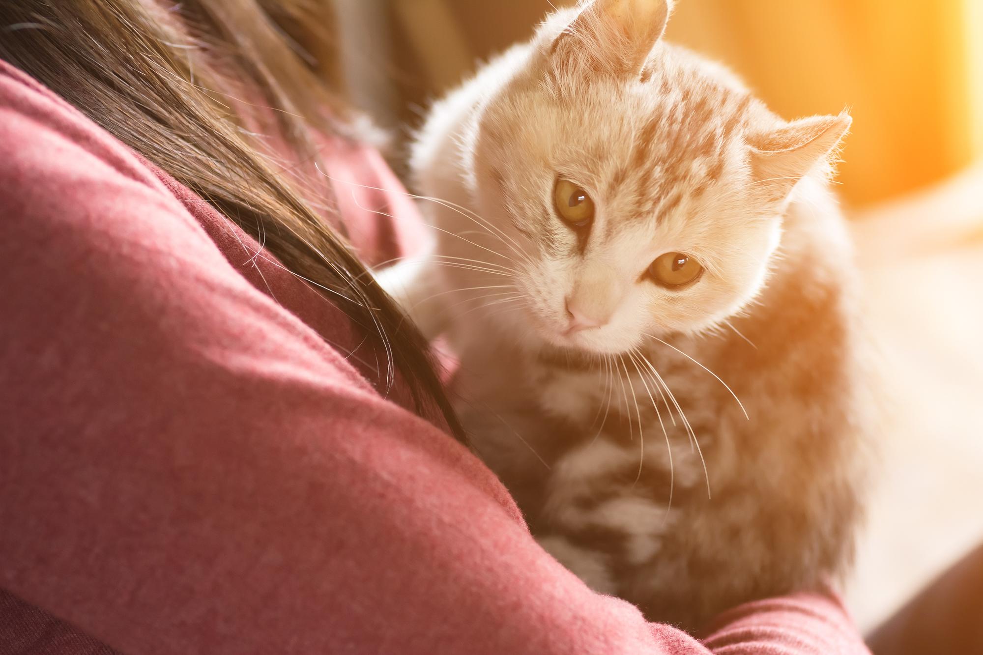 動物介護士