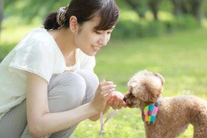 犬猫ストレスケアアドバイザー